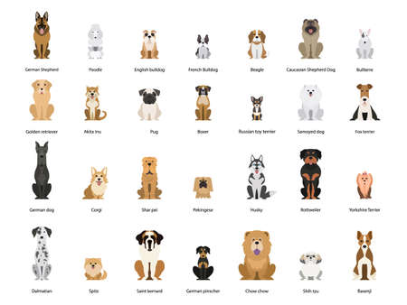 Dog set. Collection of dogs of various breed Illustration