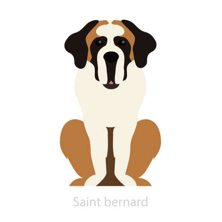 St bernard dog breed. Domestic animal, cute pet. Adorable Illustration