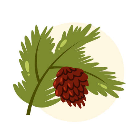 Isolated vector illustration of green pine branch with pine cone. Иллюстрация
