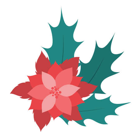 Christmas Flower or poinsettia. Beautiful red flower for Christmas decoration