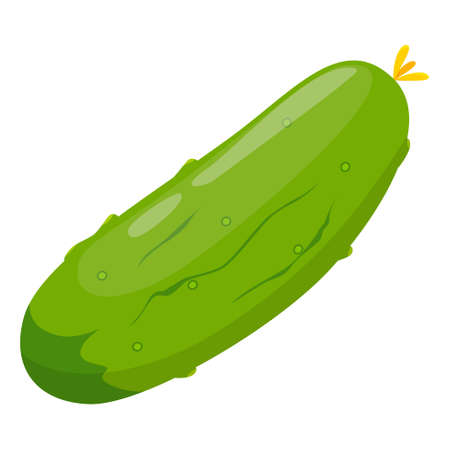 Fresh green cucumber for salad. Tasty healthy vegetable.