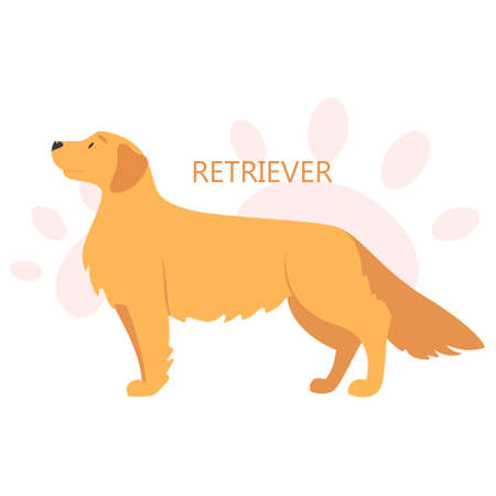 Retriever. Beautiful purebred dog. Cute funny domestic pet. Isolated vector illustration in cartoon style