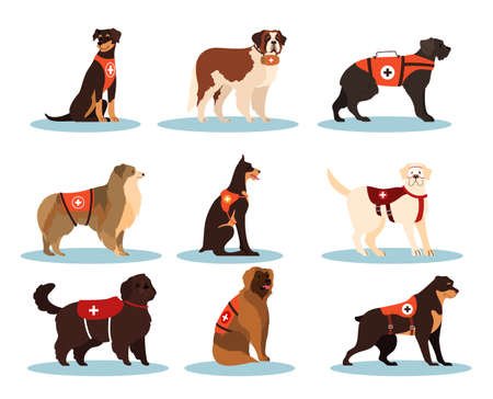 Set of dogs rescuers. Collection of the cadaver dogs of various breed