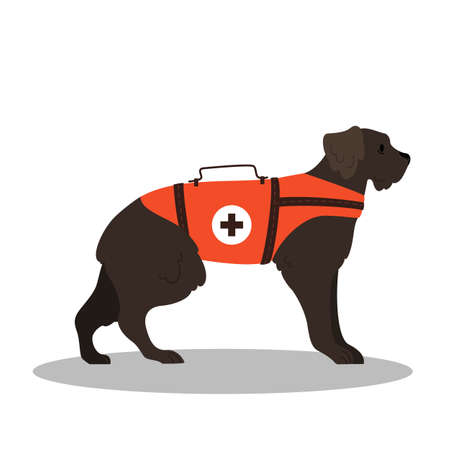 Dogs rescuer, terrier breed. Cadaver dog for finding people.