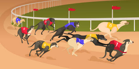 Running dog of different breed in coursing dress. Dog race concept.