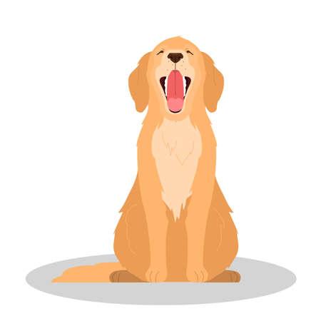 Cute yawning sleepy dog. Purebread golden retriver sitting. Funny