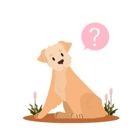 Cute dog with question mark. Russo european laika with confusion