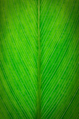 asymmetry: close up of green leaf texture
