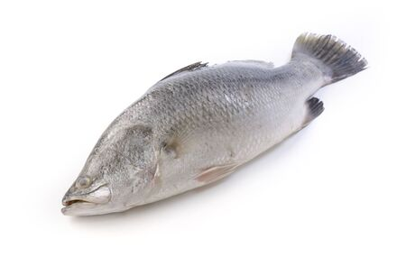 silver perch: Barramundi on white background Stock Photo