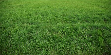 green grass on the clean lawn Stock Photo - 5492357