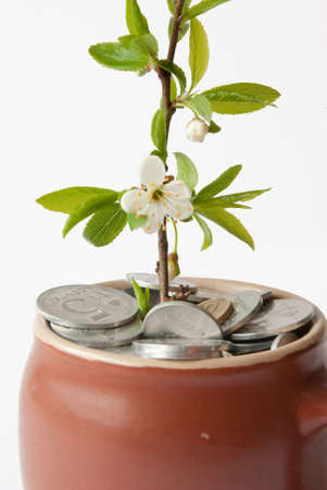 Coins and plant in pot, isolated closeup shot Stock Photo - 6881214