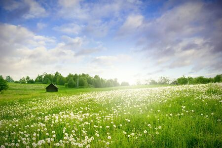 green field with with sun landscape Stock Photo - 8035402