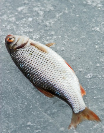 Ice Fishing Catch photo