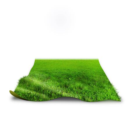 3D grass concept image over white