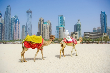 Dubai Camel on the town scape backround, United Arab Emirates photo