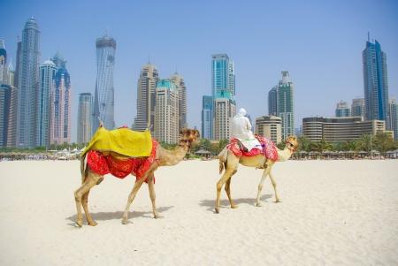 Dubai Camel on the town scape backround, United Arab Emirates Stock Photo