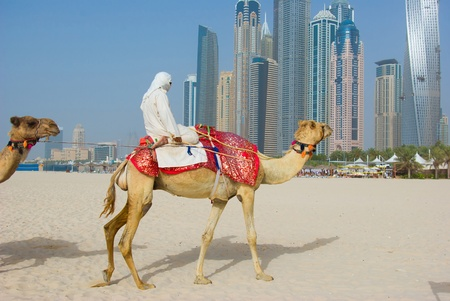 Dubai Camel on the town scape backround, United Arab Emirates Stock Photo