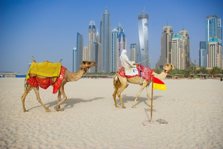 Camel on Beach in Dubai at the urban background, United Arab Emirates