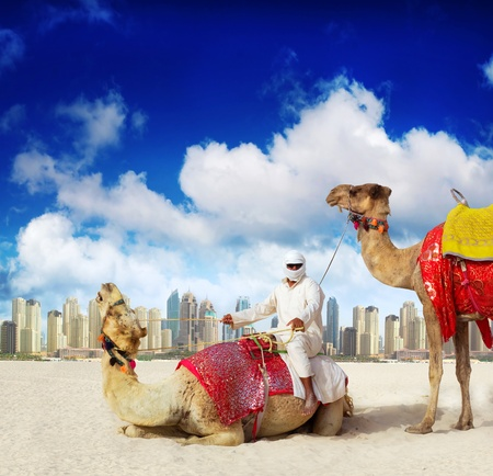 Camel on Dubai, United Arab Emirates 版權商用圖片