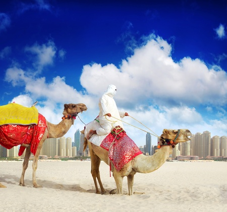 Camel on Dubai, United Arab Emirates photo