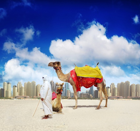 Camel on Dubai Beach 版權商用圖片