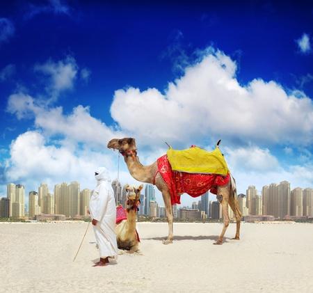 sahara: Camel on Dubai Beach Stock Photo