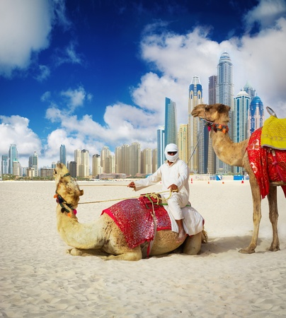 arabic desert: Camel on Dubai Beach, United Arab Emirates Stock Photo