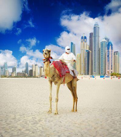 dubai: Camel on Dubai Beach, United Arab Emirates Stock Photo