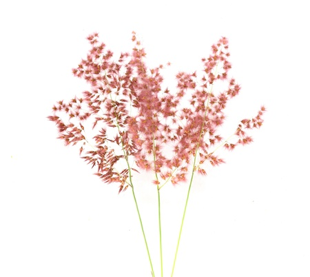 cross procesed: Grass flower on the white  Stock Photo