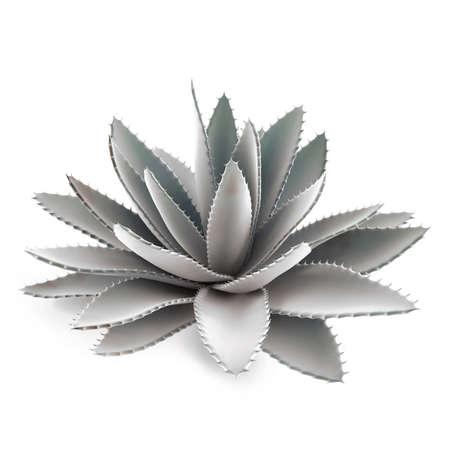 Decorative cactus aloe bush Stock Photo - 16977053
