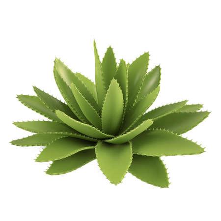 Decorative cactus aloe bush Stock Photo - 16977045