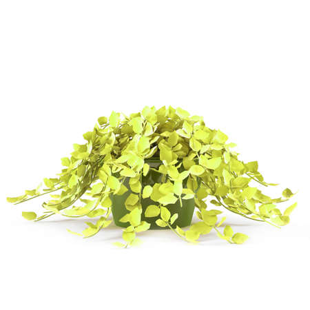 exotic pot bush Stock Photo - 16977062