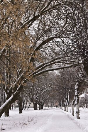A path in the snow-bound park of quiet fine morning.