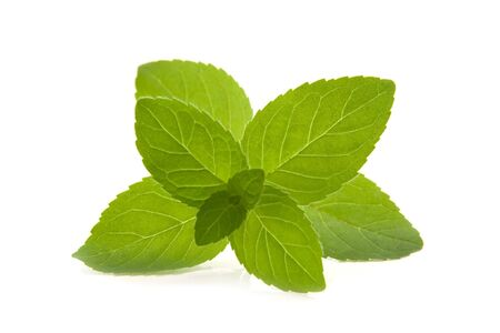 Spearmint branch on white background.