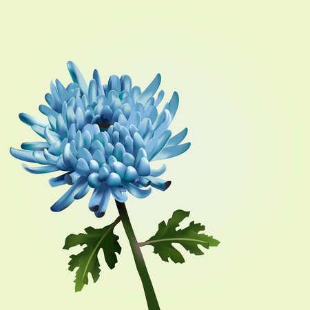 Blue Chrysanthemum Vector Illustration Illustration