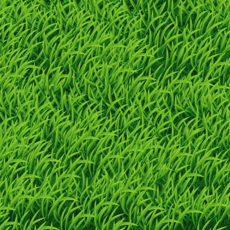 Background of Green Grass, vector Illustration  Vector