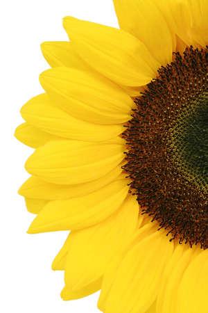 semillas de girasol: Parte de amarillo girasol aislados sobre fondo blanco  Foto de archivo