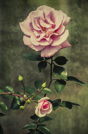 Vintage Big and Small Roses in Oil Paint Style photo
