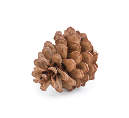 Pine cone isolated on white background (clipping path included) for Christmas decoration, holiday decorative concept Banco de Imagens