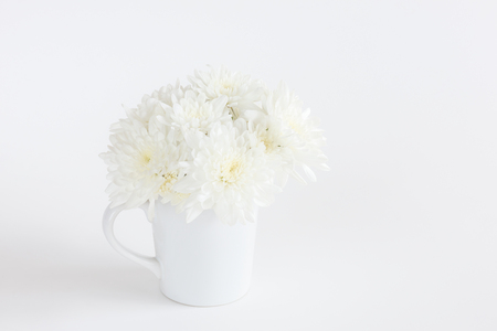 White Chrysanthemum flowers on white background with copy space for text, logo, wordings insertion or decoration, innocent white love concept for special occasion, wedding party, mother day, valentine