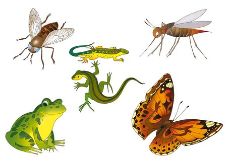 examples: fly, two lizards,butterfly and mosquito on a white background