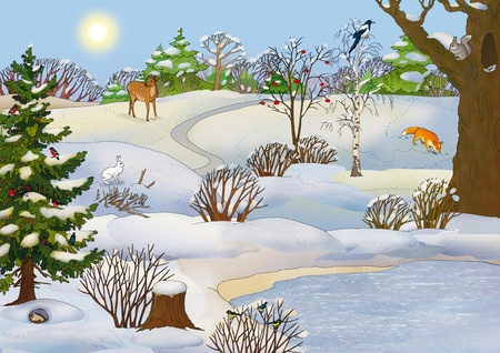forest landscape with animals in winter Stock Photo - 11882805