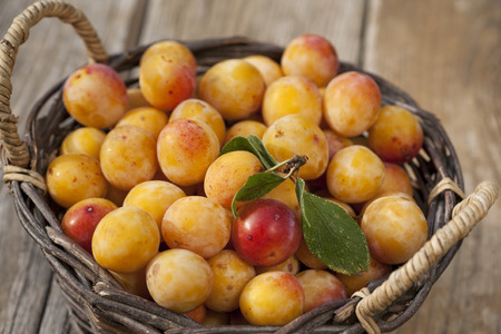 Freshly harvestet mirabelle plums photo