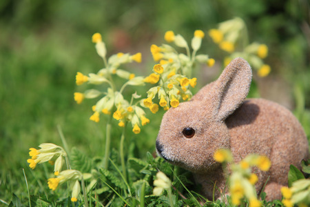 Bunny sitting between cowslip flowers photo