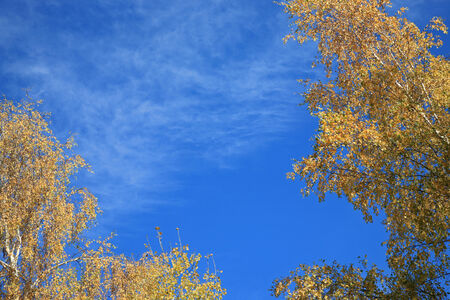 Blue sky framed by autumn leaves
