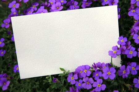Blank card in the flower bed photo