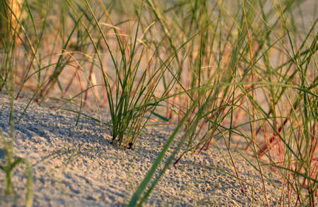 sea grass: Sea grass in the sand on the beach Stock Photo