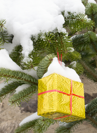 fir twig: Christmas present box hanging at snow covered fir twig