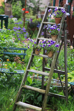 Pansy flowers decorated on an old wooden ladder in the garden