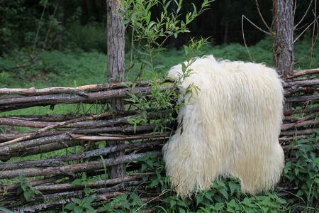 sheep skin: Sheep skin hanging on old wooden fence